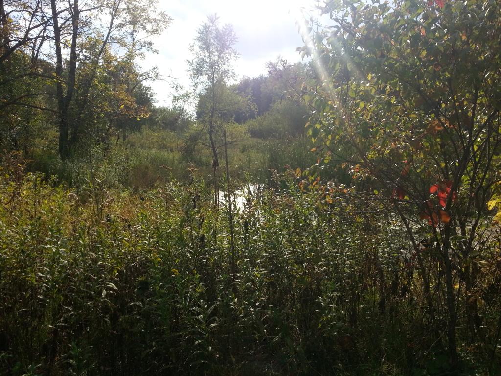 DeKok Pond